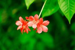 Цветок Стоковое Изображение RF