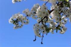 Цветок Стоковые Изображения RF