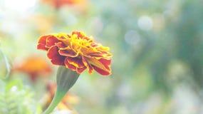 Цветок Стоковые Изображения