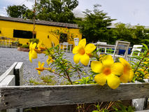 Цветок Стоковые Фотографии RF