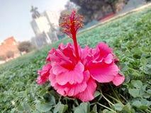 Цветок! Стоковая Фотография