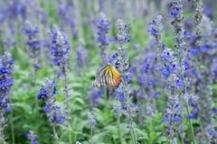 Цветок adn бабочки стоковые фотографии rf