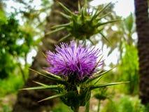 2 цветок Aechmea Стоковая Фотография