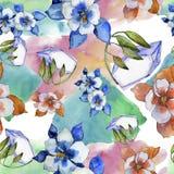 Цветок aquilegia акварели красочный Флористический ботанический цветок Безшовная картина предпосылки иллюстрация штока