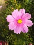 Цветок beutifull природы стоковые фото
