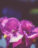 Цветок Bokeh стоковое изображение