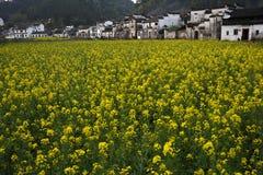 цветок cole Стоковые Фотографии RF