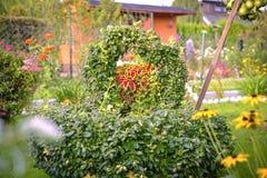 Цветок Coleus variegated Blumei стоковые фото