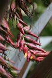 Цветок Colofull тропический около к цветеню Стоковые Изображения