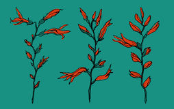 Цветок Crocosmia в цветении Стоковые Фото