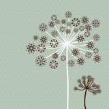 цветок dandeloin группы Стоковые Изображения RF