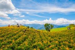Цветок Daylily на 60 каменных горах Стоковое Фото