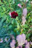 Цветок Dinamic Стоковое Изображение