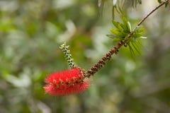 цветок exotics Стоковые Фотографии RF