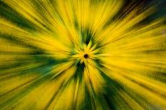цветок explodong Стоковое Изображение