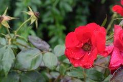 Цветок flor стоковое изображение