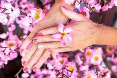 Цветок frangipani Plumeria в руке женщины на красивой декоративной розовой предпосылке Сакуры Стоковое Изображение RF
