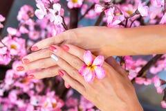 Цветок frangipani Plumeria в руке женщины на красивой декоративной розовой предпосылке Сакуры Стоковая Фотография