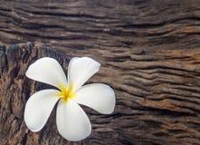 Цветок Frangipani (Plumeria) на древесине Стоковая Фотография RF