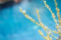 Цветок Gagnep loureiri Dracaena Стоковая Фотография