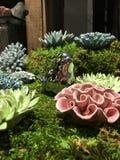 Цветок Georgia саванны керамический Стоковое фото RF