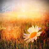 Цветок Grunged Стоковые Фото