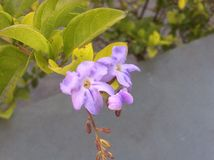 цветок i Стоковые Фотографии RF