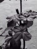 Цветок Isoleted Стоковое Фото