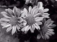 Цветок Isoleted Стоковые Фото