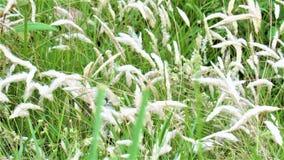 Цветок Kas Стоковые Изображения RF