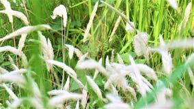Цветок Kash Стоковая Фотография RF