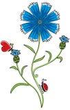 Цветок Knapweed Иллюстрация вектора