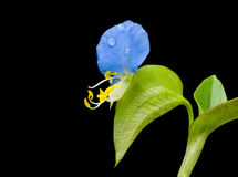 цветок labiate Стоковые Фото