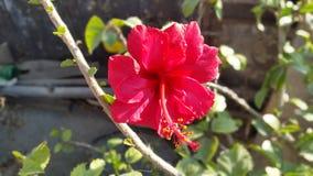 Цветок Lilly Стоковая Фотография