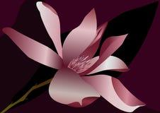 Цветок Magnolia Стоковое фото RF