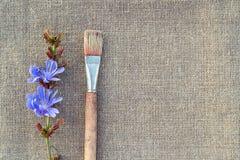 Цветок Paintbrush и цикория на увольнении Стоковая Фотография