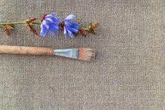 Цветок Paintbrush и цикория на увольнении Стоковые Изображения