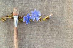 Цветок Paintbrush и цикория на увольнении Стоковые Изображения RF