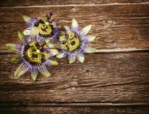 Цветок Passionflower Стоковое Фото