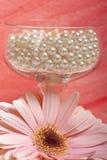 цветок pearls белизна Стоковое фото RF