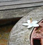 Цветок Plumplain Стоковые Изображения RF