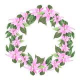 Цветок Poinsettia Акварель звезды рождества Вручите покрашенный Новый Год зимы эскиза с Рождеством Христовым и счастливый кругло иллюстрация штока