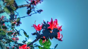 Цветок Polash стоковое изображение rf