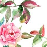 Цветок Rose с зелеными листьями Стоковое Изображение RF