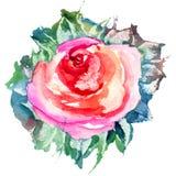 Цветок Rose Стоковое Изображение RF