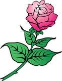 Цветок Rose Стоковые Изображения RF