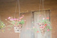 Цветок Rosemoss в баке смертной казни через повешение Стоковые Фото