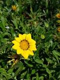 Цветок s Стоковые Изображения RF