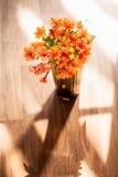 Цветок sebestena Cordia Стоковые Фото
