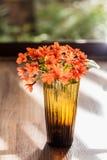 Цветок sebestena Cordia Стоковые Фотографии RF